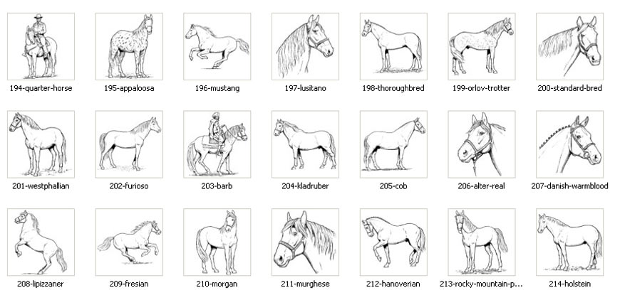 Horse Images Stable Name Signs Memorial Plaques The