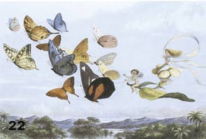 Fairies flying with butterflies