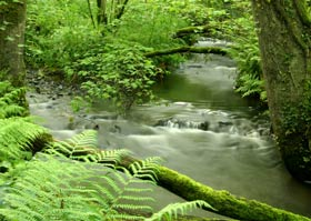 Small Woodland River