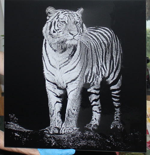 Engraved black and white aluminium pictures - tiger