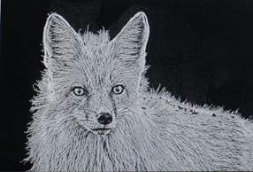 Black & White etching - silver fox